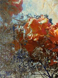 Tangled II by Danielle Harrington