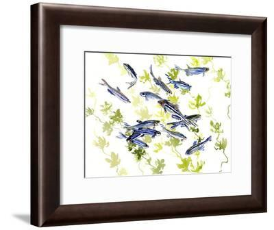 Danio Zebra Fish-Suren Nersisyan-Framed Art Print