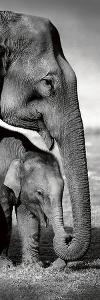 Indian Elephants by Danita Delimont