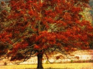 Autumn Oak I by Danny Head