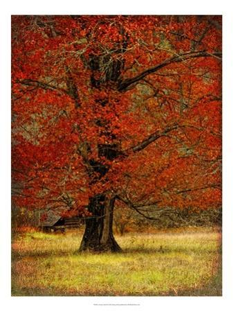 Autumn Oak II by Danny Head