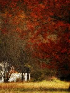 Beyond October's Maple by Danny Head