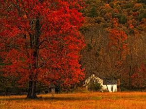 Farm House on a Autumn Morn' by Danny Head