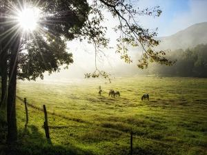 Morning Graze I by Danny Head