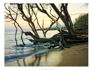Reaching for the Sea I by Danny Head