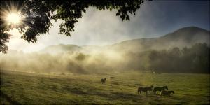 Running in the Mist by Danny Head