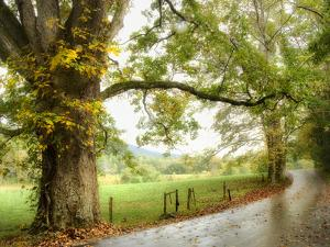 Wet Path by Danny Head