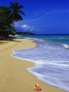 Conch Shell on Playa Grande Beach by Danny Lehman