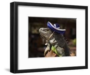 Iguana Wearing a Sombrero in Cabo San Lucas by Danny Lehman