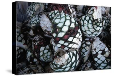 Pile of Tequila Agave Bulbs