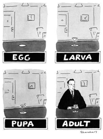 Four panels labelled EGG, LARVA, PUPA, and ADULT, showing successively: an… - New Yorker Cartoon by Danny Shanahan