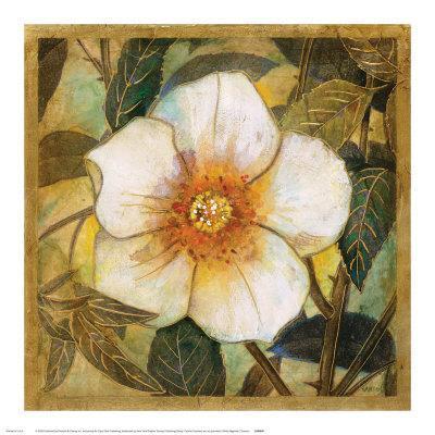 White Magnolia I