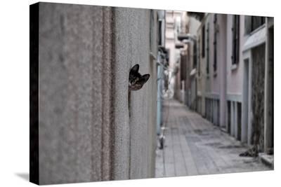 Dantel Street Cat-Ali Ayer-Stretched Canvas Print