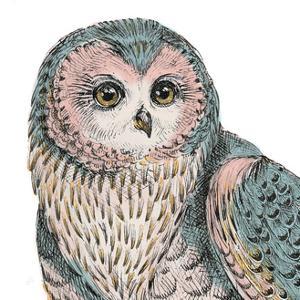 Beautiful Owls IV Pastel Crop by Daphne Brissonnet