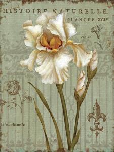 Histoire Naturelle II by Daphne Brissonnet
