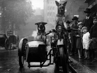 Daredevil Dogs--Photographic Print