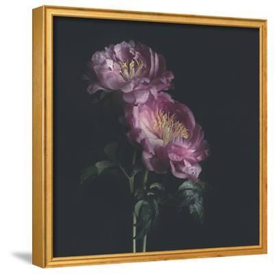 Dark Florals-Sarah Gardner-Framed Photographic Print