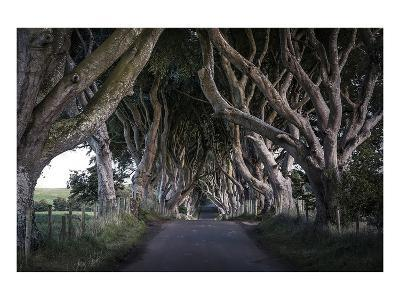 Dark Hedges Northern Ireland--Art Print