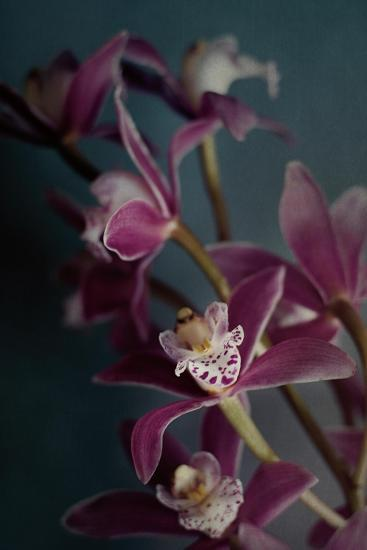 Dark Orchid IV v.2-Elizabeth Urquhart-Art Print
