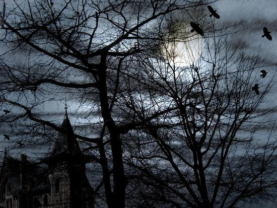 Dark Shadows-Katherine Sanderson-Photographic Print