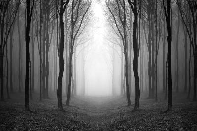 Dark Woods-PhotoINC-Photographic Print