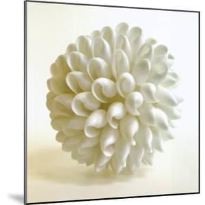 Shell III by Darlene Shiels