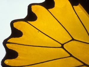 A Close View of a Butterfly Wing by Darlyne A. Murawski