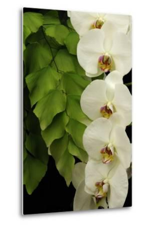 A Raceme of Phalaenopsis Orchids Alongside a Giant Maidenhair Fern