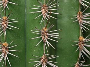 Cereus Cactus Spines Up Close, Providence, Rhode Island by Darlyne A. Murawski