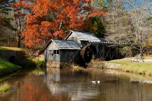 Ducks Swimming in a Pond at an Old Grist Mill in an Autumn Landscape by Darlyne A^ Murawski