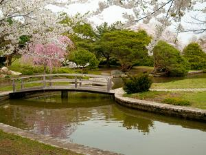 Japanese Garden with Cherry Trees, Pond and Footbridge in Springtime by Darlyne A^ Murawski
