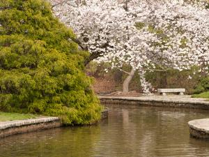 Japanese Garden with Flowering Cherry Tree, Green Shrub and Pond by Darlyne A^ Murawski
