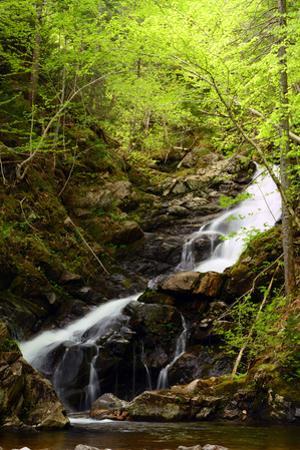 Macintosh Brook Waterfalls in Cape Breton Highlands National Park by Darlyne A^ Murawski