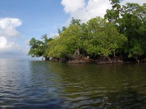 Mangroves a the Edge of a Small Island in the Celebes Sea by Darlyne A. Murawski