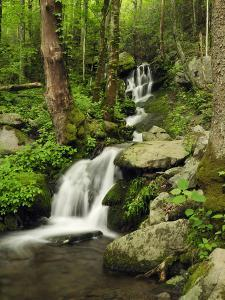 Scenic View of a Smoky Mountains Waterfall and Forest by Darlyne A^ Murawski