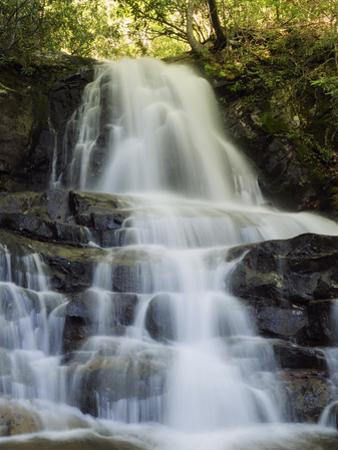 Scenic View of Laurel Falls in the Smoky Mountains by Darlyne A^ Murawski