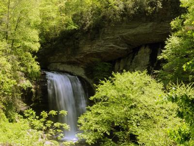 Scenic View of Looking Glass Falls in Spring by Darlyne A^ Murawski