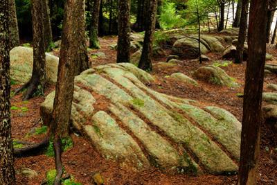 Trees and Rocks in a Forest Understory in Acadia National Park by Darlyne A^ Murawski