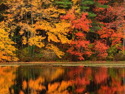 Trees with Autumn Foliage Reflected in a Pond