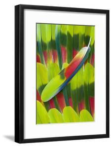 Amazon Parrot Tail Feather Design by Darrell Gulin