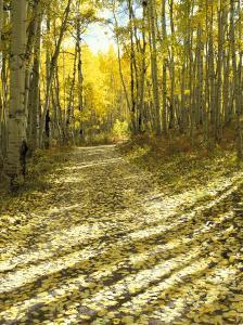 Aspen, Dirt Road, Kebler Pass, Colorado, USA by Darrell Gulin