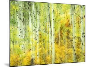 Aspens in Fall, Kebler Pass, Colorado, USA by Darrell Gulin