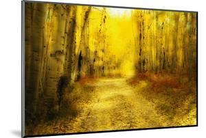 Aspens Lining Road Along Kebler Pass by Darrell Gulin