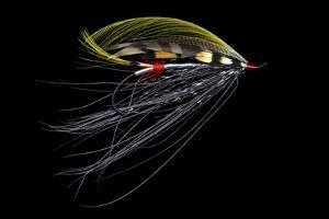 Atlantic Salmon Fly designs 'Pitcroy Fancy' by Darrell Gulin