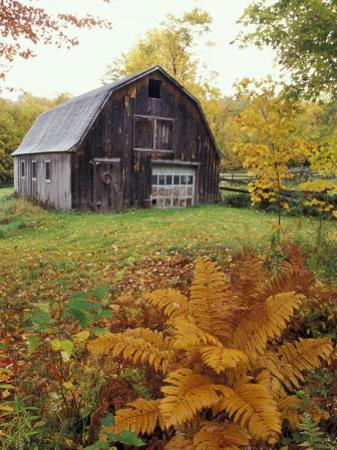 Barn and Fall Colors near Jericho Center, Vermont, USA by Darrell Gulin