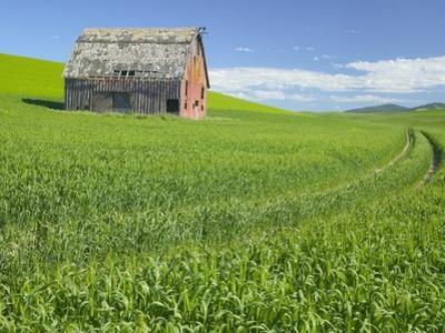 Barn and Vehicle Tracks in Wheat Field in Idaho