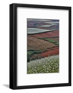Canola and Corn Crop,Kunming Dongchuan Red Land, China by Darrell Gulin