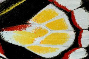 Close-Up Detail Wing Pattern of Tropical Butterfly by Darrell Gulin