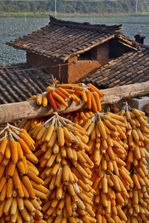 Corn Hanging to Dry in Old Farm House, China Kunming District