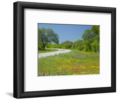 Curve in Roadway with Wildflowers Near Gonzales, Texas, USA